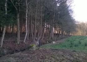 Onderhoud houtwallen
